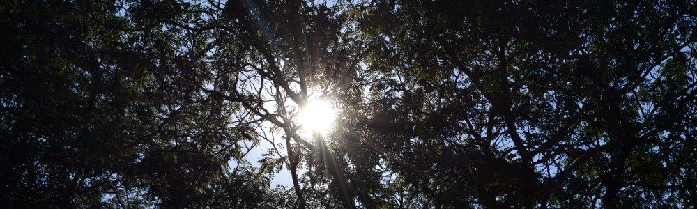 Sun Shining Through Trees
